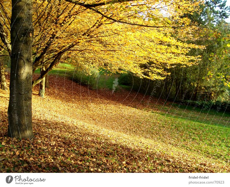 Nature Beautiful Tree Leaf Yellow Forest Autumn Meadow Lanes & trails Warmth Physics Seasons