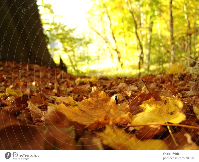 yellow ground Exterior shot Day Sunlight Blur Worm's-eye view Beautiful Nature Autumn Warmth Tree Leaf Forest Lanes & trails Soft Yellow Seasons Physics