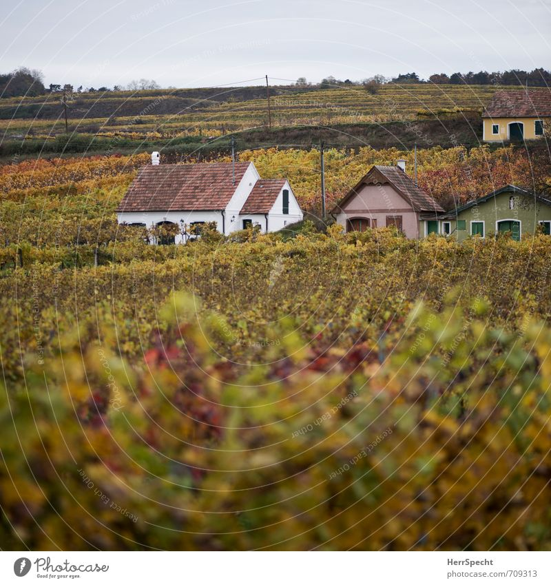 Wine Quarter Square Landscape Autumn Plant Hill Austria Federal State of Lower Austria Weinviertel Village House (Residential Structure) Detached house Hut