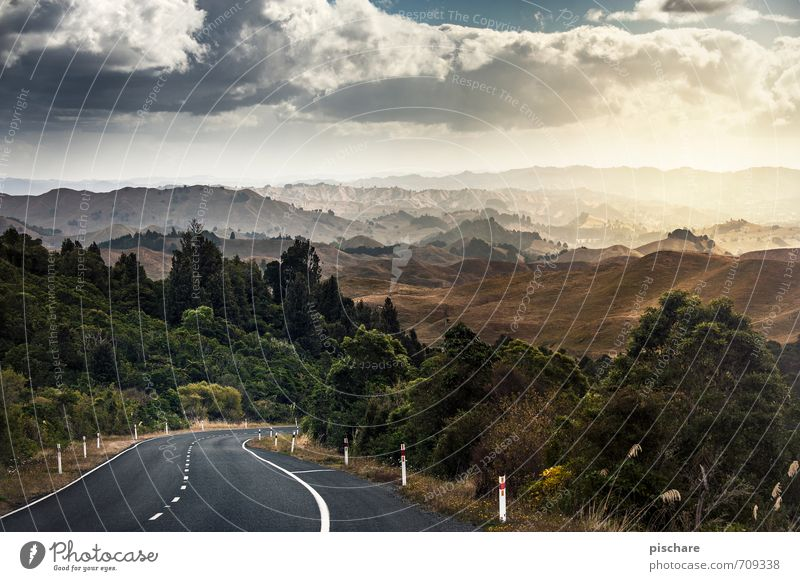 Nature Vacation & Travel Beautiful Landscape Street Freedom Exceptional Horizon Bushes Beautiful weather Adventure Infinity Hill New Zealand