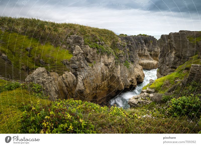 New Zealand Landscape Grass Rock Coast Exotic Natural Adventure Vacation & Travel Colour photo Exterior shot Day Deep depth of field Wide angle
