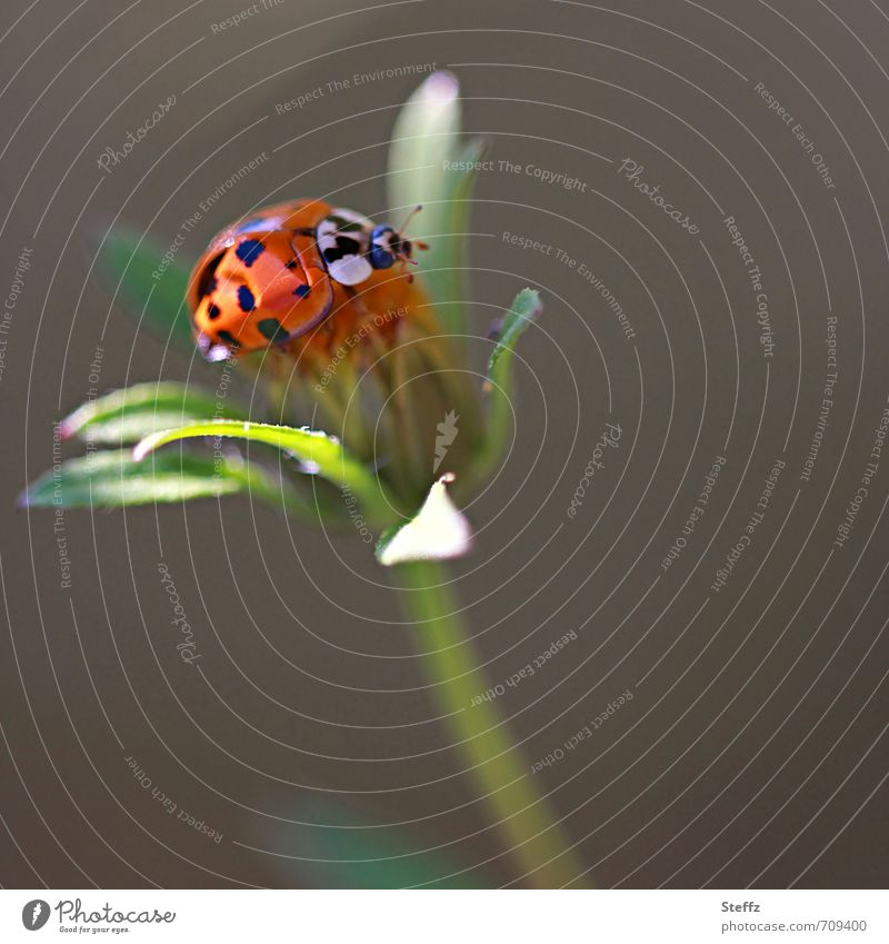 Nature Green Plant Summer Leaf Animal Environment Life Happy Orange Living thing Middle Ease Easy Beetle Crawl
