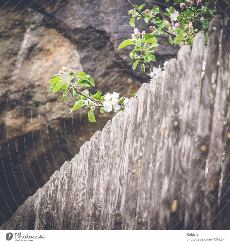 Nature Green Plant Tree Environment Spring Blossom Gray Wood Stone Natural Brown Rock Blossoming Curiosity Fence