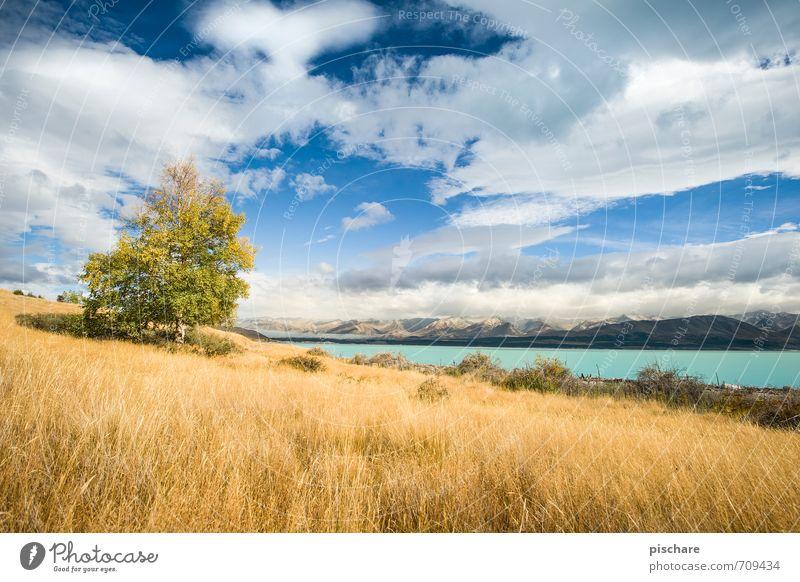 Nature Beautiful Tree Landscape Clouds Yellow Meadow Autumn Grass Natural Beautiful weather Seasons New Zealand