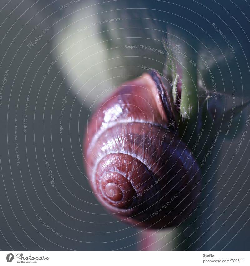 a snail crawls slowly, at a snail's pace, upwards Crumpet sluggishness creep Spiral Snail shell Slowly Light reflection grey-green Upward Slow motion spirally