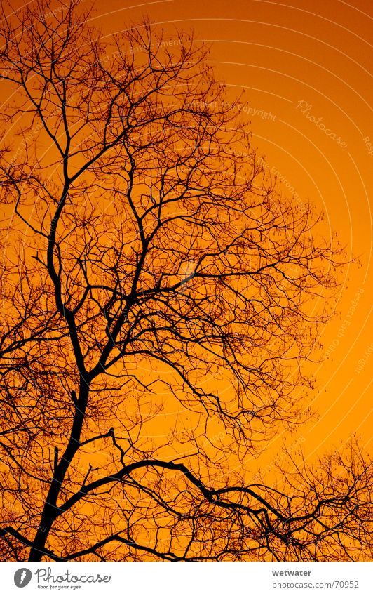 orange sky Sky Red Tree Black Orange Shadow silhuette Morning Structures and shapes Branch