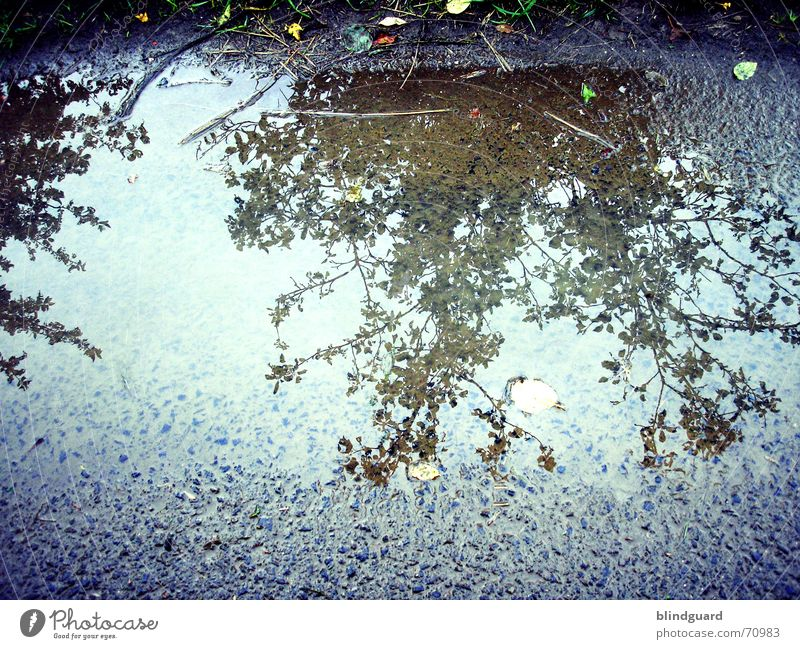 mirror-inverted Leaf Reflection Puddle Summer Footpath Tree Bushes Wayside Water Rain Street