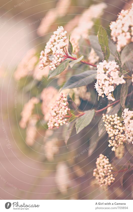 AST 7 I off into the hedge Environment Nature Plant Spring Bushes Growth Blossoming Delicate Many Subdued colour Exterior shot Close-up Detail Deserted