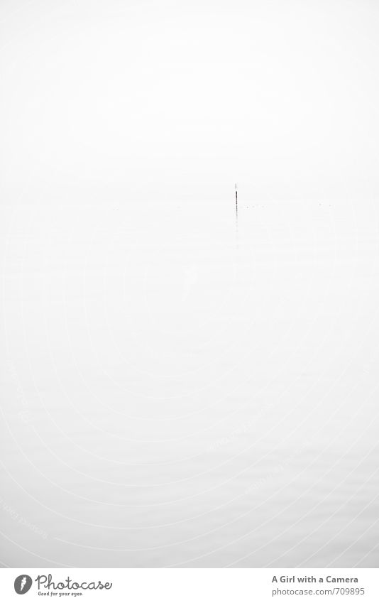 Nature White Calm Environment Exceptional Lake Fog Elegant Esthetic Lakeside Original Pole Bad weather Lake Constance