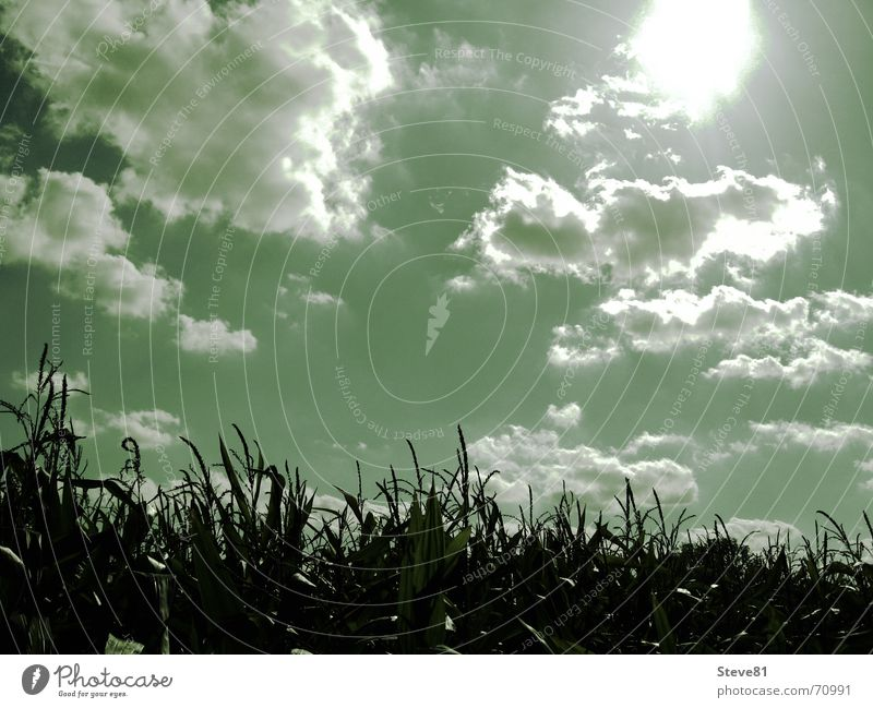 Nature Sky Sun Green Clouds Relaxation Landscape Moody Field Hope Trust Dazzle Optimism Maize