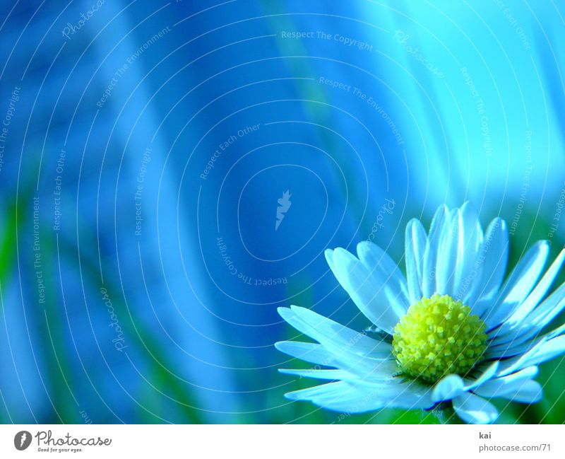 Nature Beautiful Flower Delicate Daisy Individual Love of nature