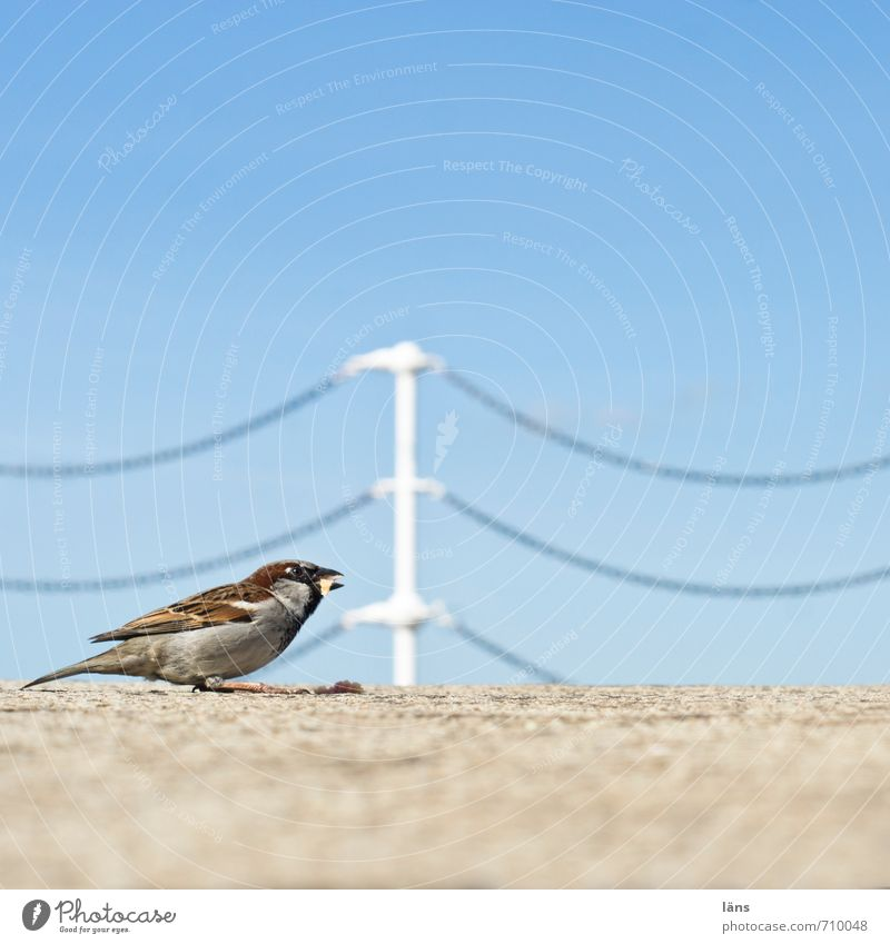 dust collector Bird Sparrow To feed Chain Barrier Sky