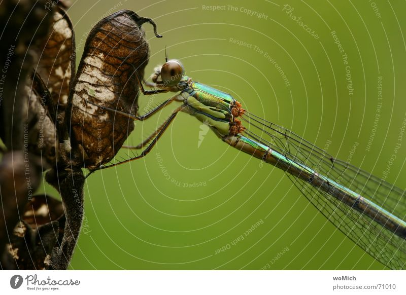 Nature Eyes Garden Break Wing To hold on Insect Pond Dragonfly