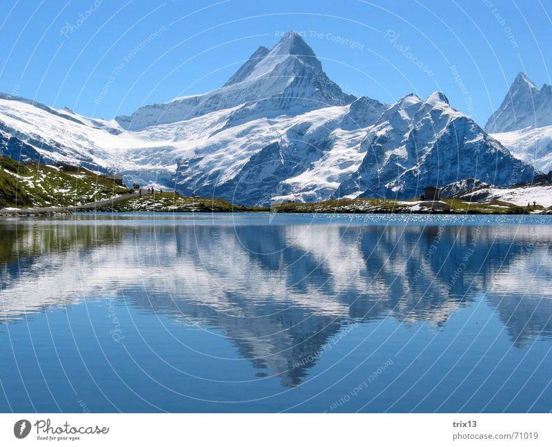 Nature Water Sky White Blue Snow Meadow Mountain Lake Large Vantage point Alps Point Idyll Antlers Schreckhorn