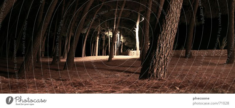 Tree Forest Dark Wall (barrier) Lanes & trails Brown Footpath Coniferous trees Wood flour Aloe