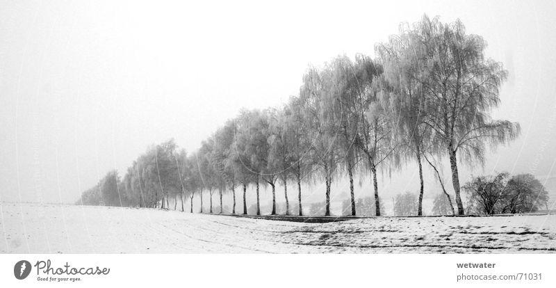 White Tree Winter Black Cold Snow Death Fog Branch Row Avenue Dreary