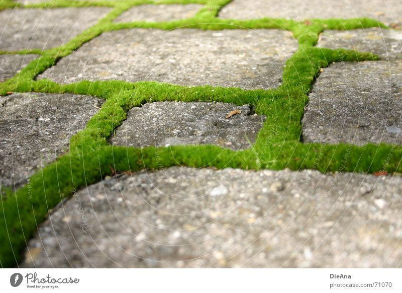 Nature Green Summer Fresh Farm Cobblestones Moss Furrow Overgrown Pave