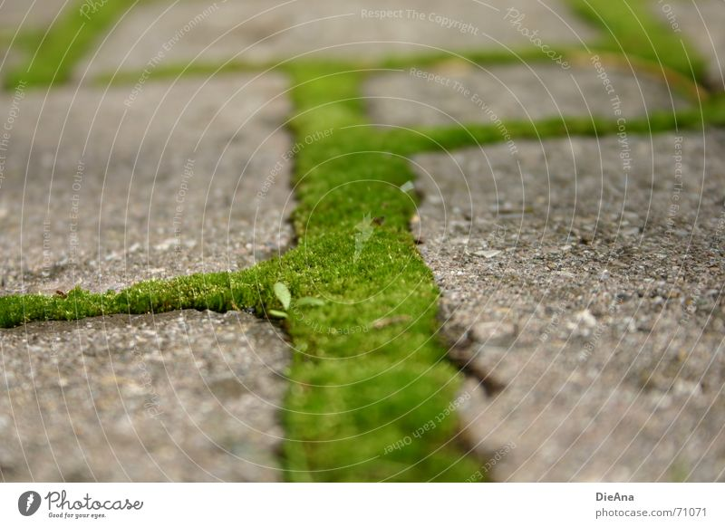 green ways (4) Pave Furrow Overgrown Green Fresh Summer Nature Cobblestones Farm Moss cobblestone cobbled chink