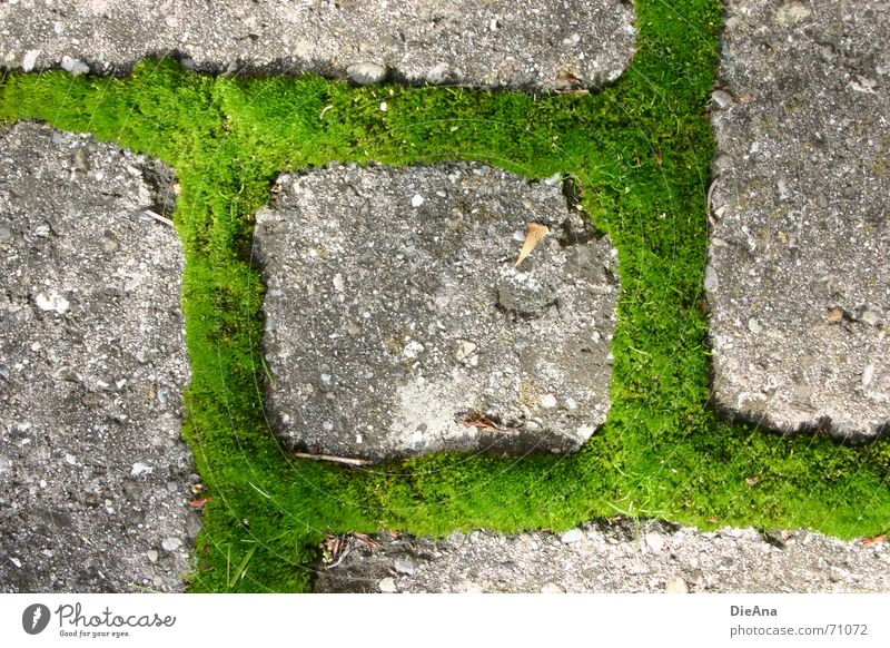 Nature Green Summer Fresh Farm Cobblestones Moss Furrow Overgrown Pave