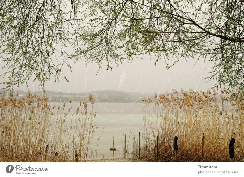 AST 7 | boatless lake Trip Environment Nature Water Sky Tree Common Reed Lakeside Lake Constance Pole Simple Natural Emotions Calm Dream Colour photo