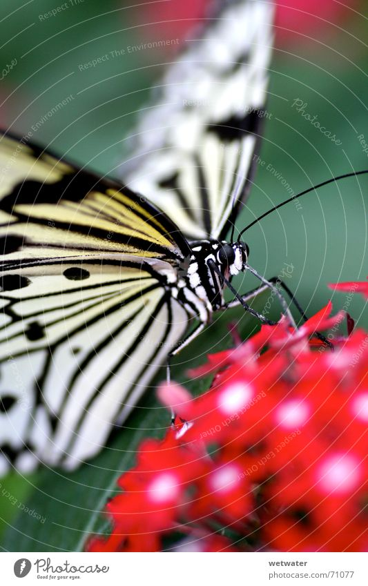 Nature White Red Summer Flower Small Blossom Legs Flying Wing Insect Butterfly Virgin forest Exotic Fragile Feeler