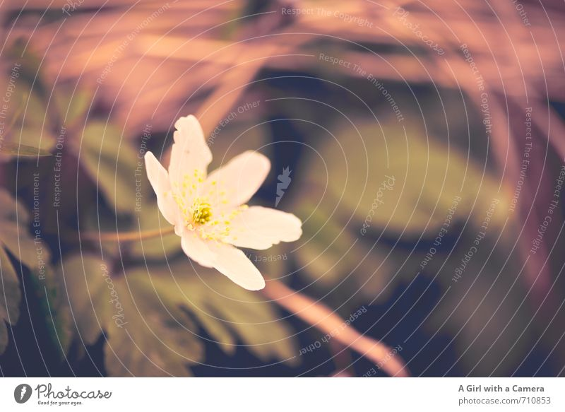 AST 7 I I am now also here Environment Nature Plant Spring Flower Garden Growth appear Beautiful Blossoming White Stick out Subdued colour Exterior shot