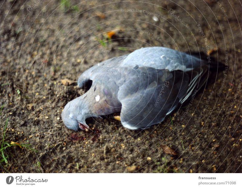 Animal Death Bird Earth Sleep Floor covering Feather Pigeon Like Peaceful Slate blue