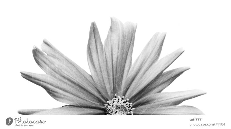 half flower Flower Blossom Summer Half Plant Black & white photo