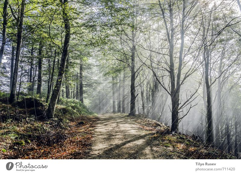 Mystic road trough the forest Beautiful Sun Mountain Nature Tree Forest Places Street Lanes & trails Natural Brown Green Colour Peace wood inside Spain Europe