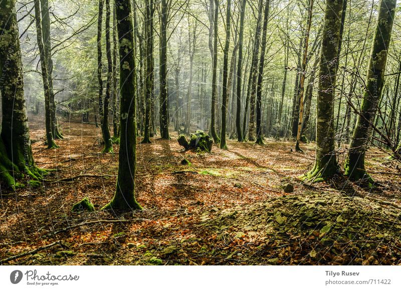 Beautiful Forest Environment A Royalty Free Stock Photo From Photocase