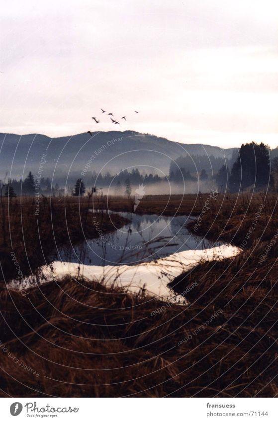 Nature Mountain Landscape Bird Fog River Idyll Bavaria Peaceful Oberammergau