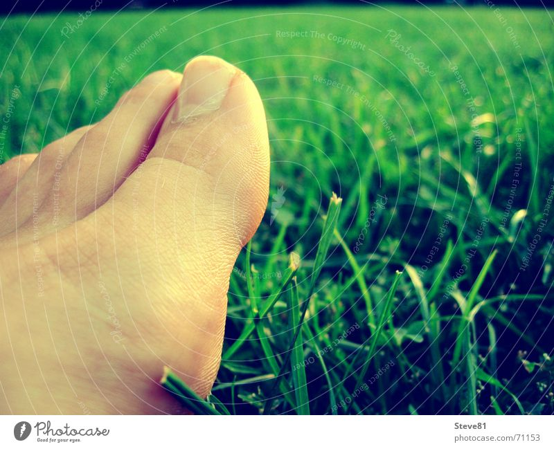 feet me Toes Meadow Green Relaxation Feet Detail Barefoot