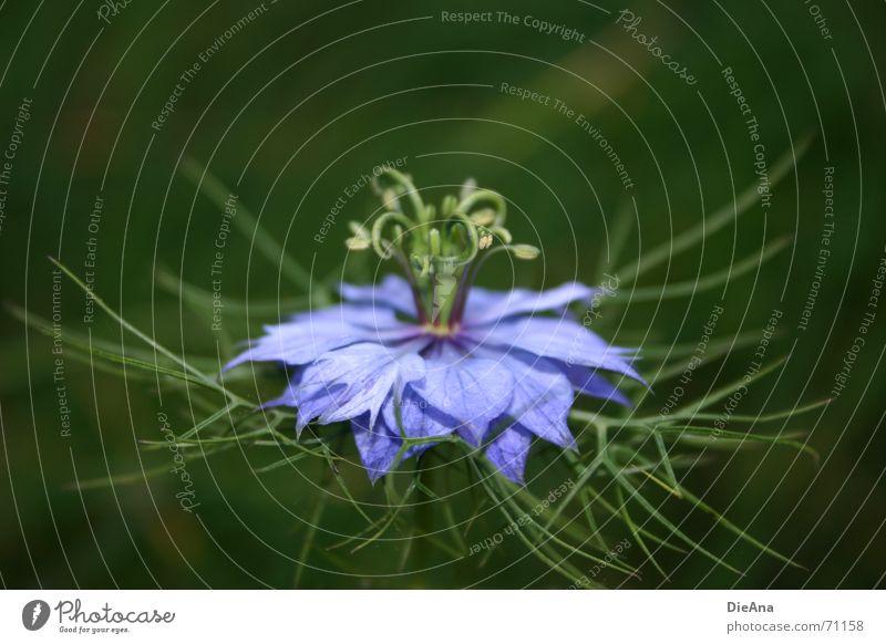 Blue Green Summer Plant Flower Violet Treetop Blossom leave Vessel Delicate