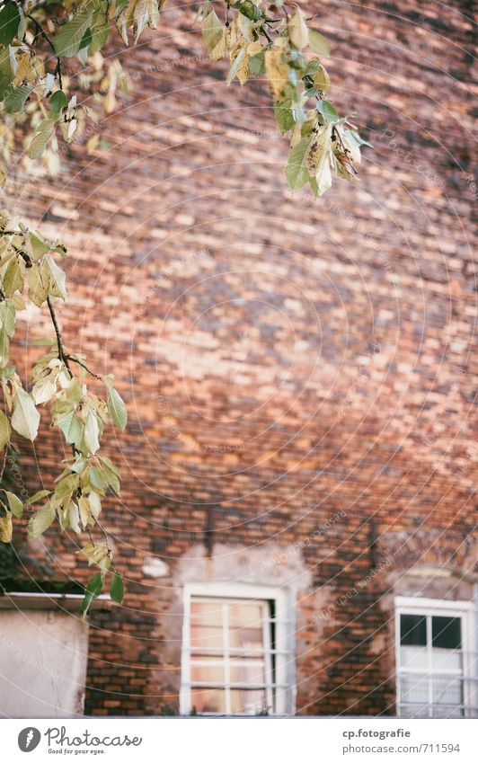 City Plant Tree Wall (building) Wall (barrier) Beautiful weather Brick wall Brick construction