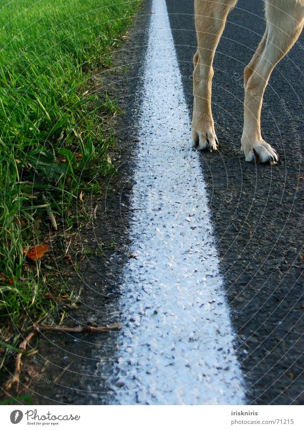 Paw way! Grass Roadside White Line Dog Legs Lanes & trails Nature Street Detail Parts of body Lane markings Exceptional Street dog