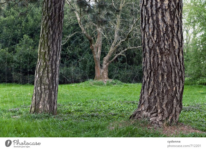 HALLE/S TOUR | Trees Environment Nature Landscape Spring Park Meadow Esthetic Relationship Loneliness Relaxation Idyll Uniqueness Life Center point