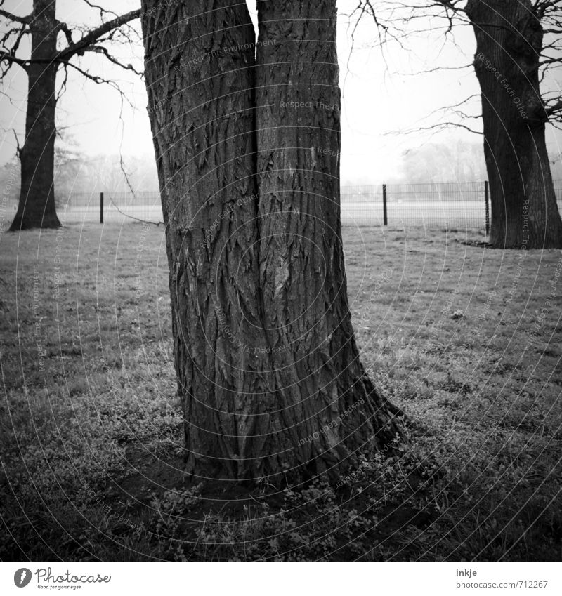 Forever Environment Nature Spring Autumn Fog Tree Tree bark Tree trunk Park Growth Old Exceptional Dark Together Large Gray Black Emotions Agreed Love