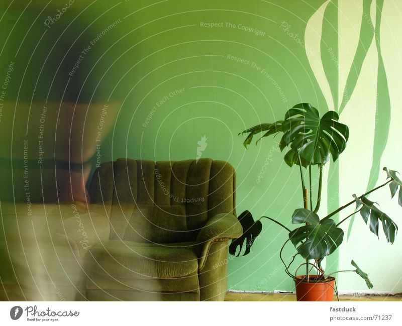 fleeting Cloth Plant Wall (building) Parquet floor Green Relaxation Row Chair Walking Movement Moving (to change residence)