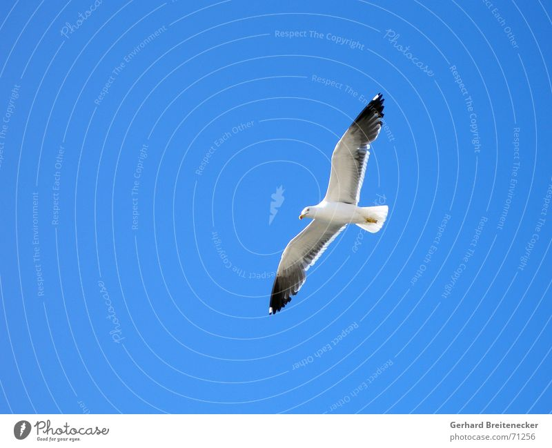 Flight number 749 Bird Animal Seagull Ocean Air Hover Glide Vantage point Detached Dream Nosedive Infinity Review Light heartedness Weightlessness White Beak