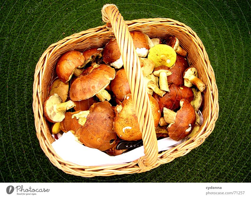 Lunch is secured... Basket Collection Nutrition Healthy Sweet chestnut Together Meal Success Mushroom Nature Food Organic produce Arrange