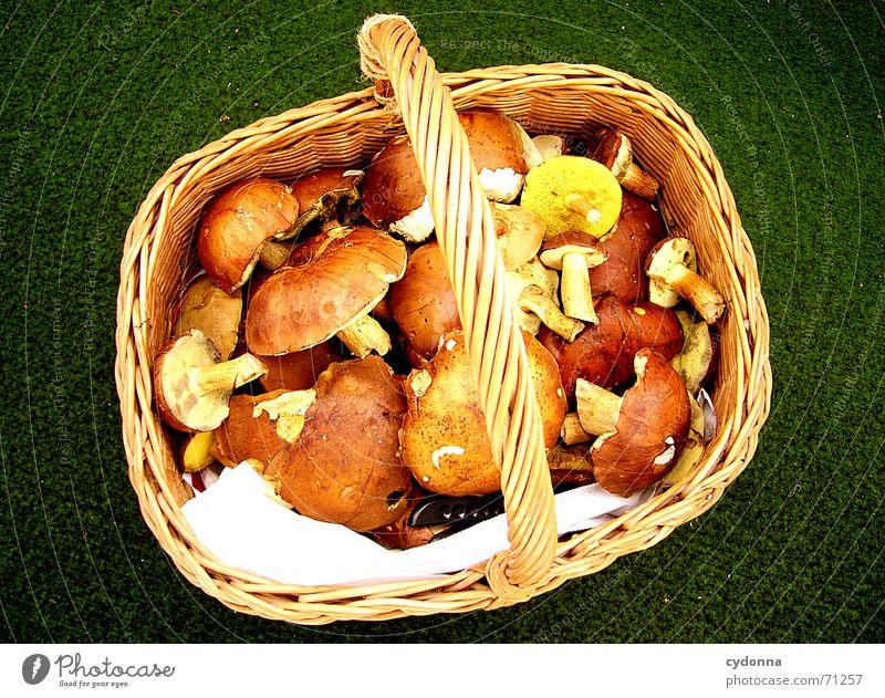 Nature Nutrition Food Healthy Together Success Collection Organic produce Mushroom Meal Basket Arrange Sweet chestnut