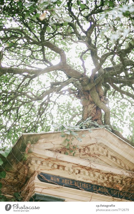 Nature Plant Summer Tree Autumn Hope Belief Passion Brave Cemetery Grave To console Tomb