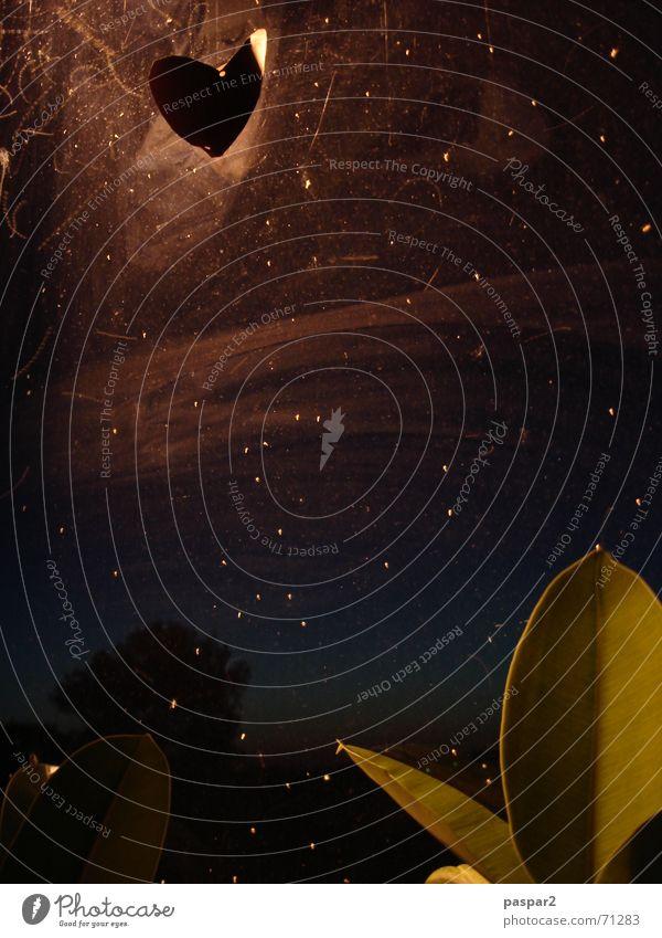 Plant Dark Moody Heart Stars Glass Starry sky Mosquitos