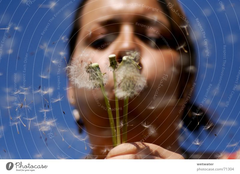 Blue Summer Girl Face Happy Air Wind Flying Desire Dandelion Blow Seed Child Pollination