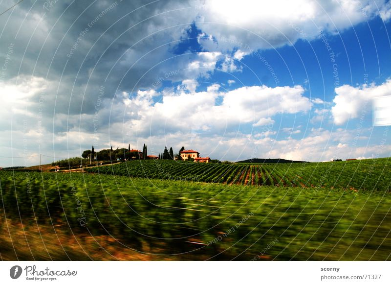 In the ecstasy of Tuscany Far-off places Freedom Summer House (Residential Structure) Landscape Plant Sky Clouds Beautiful weather Bushes Field Hill Village