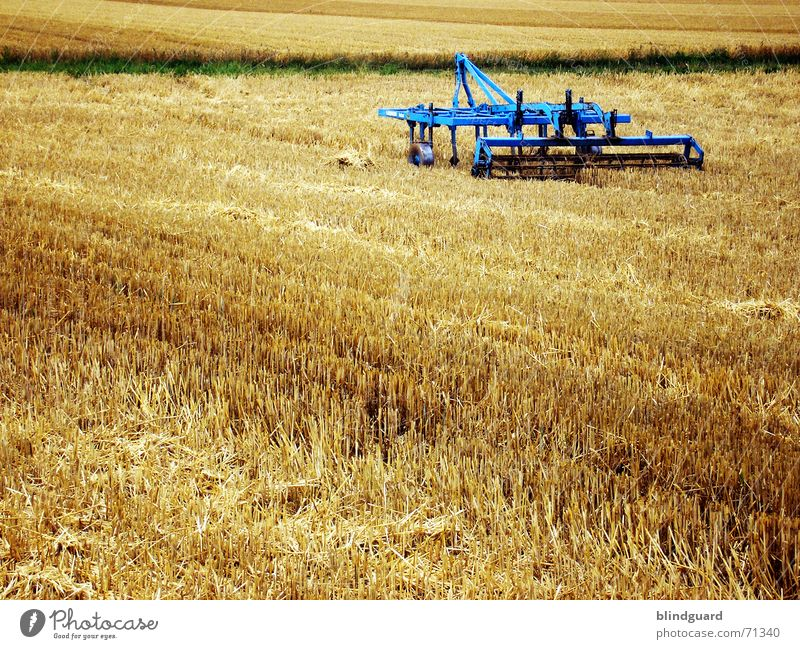 Blue Summer Warmth Bright Work and employment Field Horizon Flying Trip Crazy Europe Physics Grain Harvest Grain Appetite