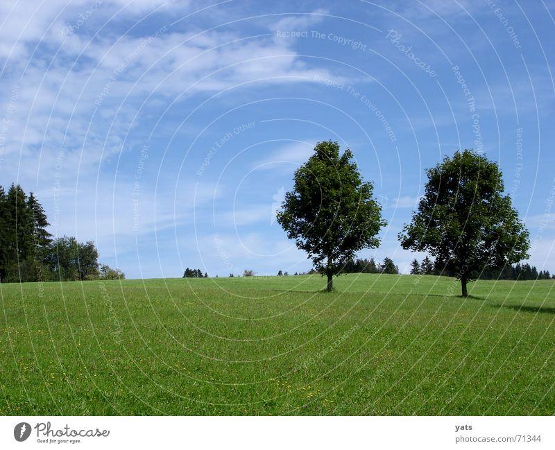 Sky Tree Green Blue Summer Clouds Meadow Grass Allgäu