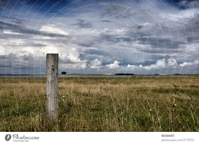 Denmark Nature Landscape Sky Meadow Field Fjord Emotions Moody Honest Freedom Colour photo Exterior shot Deserted Day Light Wide angle