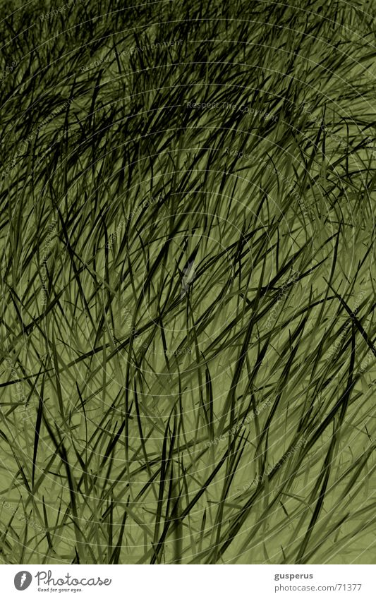 { ChaosTheory 2wei } Lie Sheepish Muddled Green Growth Grass Blade of grass Structures and shapes Comforting Tall Nature thrive hear grass grow early exercises