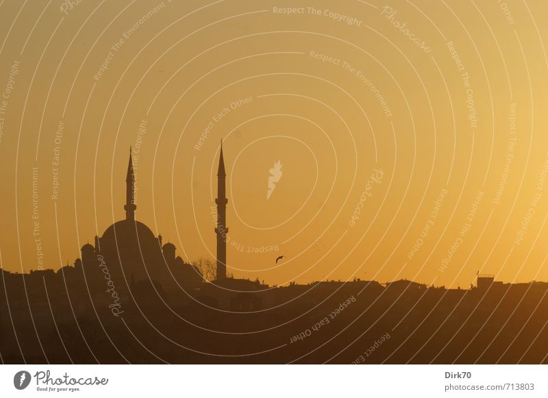 Evening light in the Orient II City trip Sunrise Sunset Beautiful weather Istanbul Turkey Old town Skyline Tower Manmade structures Mosque Minaret Domed roof